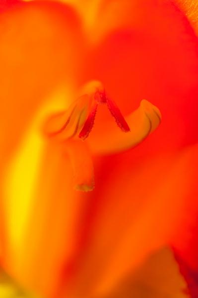 Orange Flower Detail-4