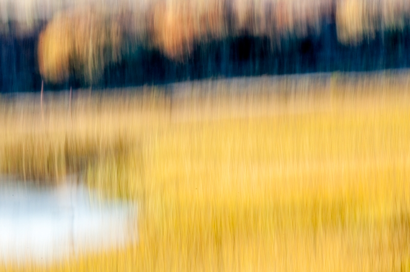 San Dieguito River Park, Thatched Lagoon Abstract-2