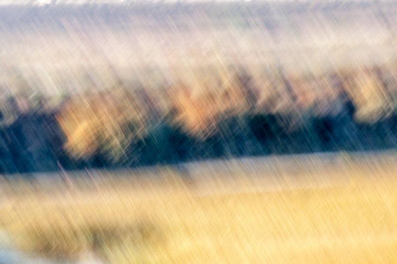 San Dieguito River Park, Thatched Lagoon Abstract