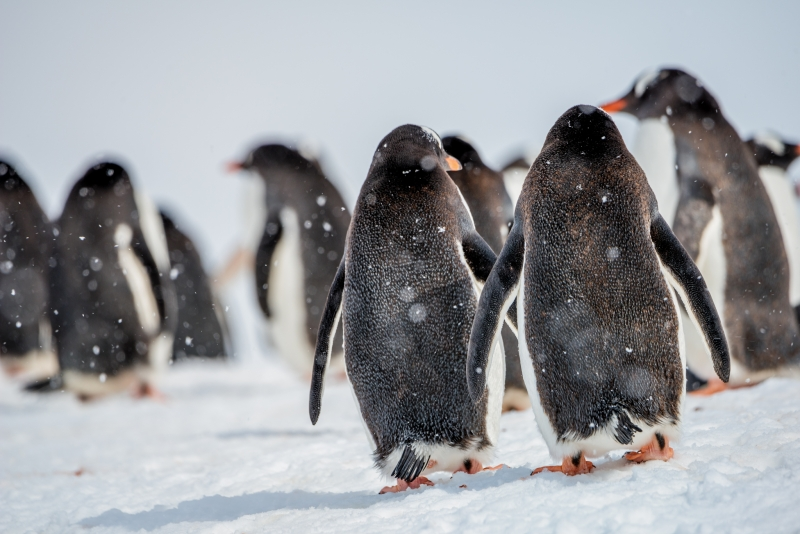 Snow Day in Antarctica LMarun