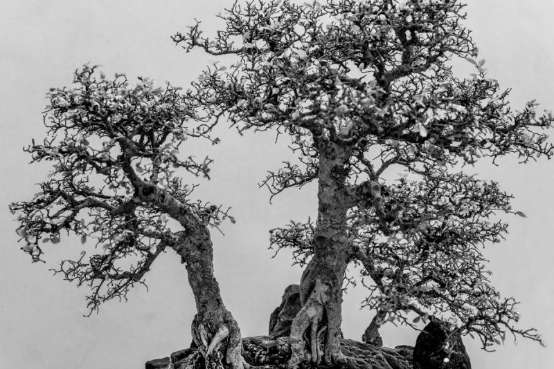 Huntington Trio in Black and White