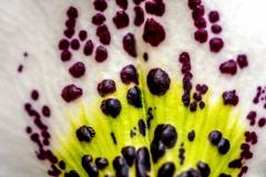 Orchid Detail LMarun
