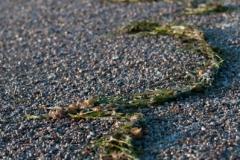 Del Mar-Seaweed on Sand
