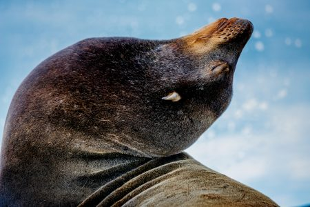 California sea lion enjoying a sunny day by the water.